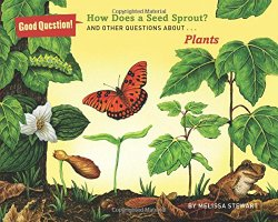 how-does-a-seed-sprout