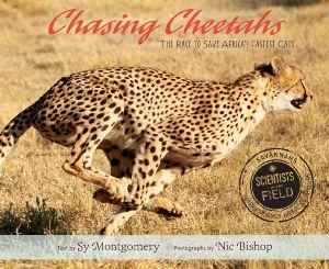 SITF Cheetah