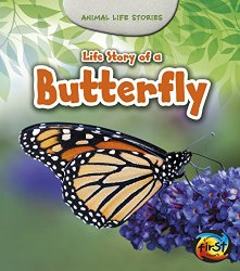 life-story-of-a-butterfly